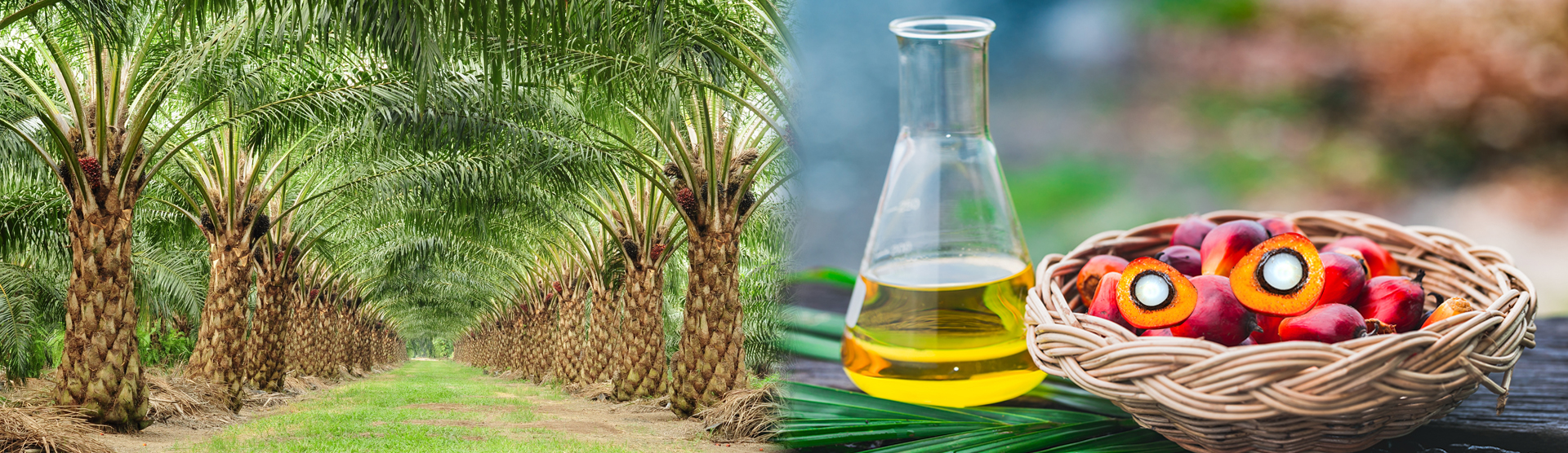 exports_palm_pleochemicals_80_countries